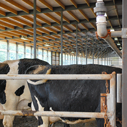 5 keys to effectively soaking dairy cows | The Artex Connection
