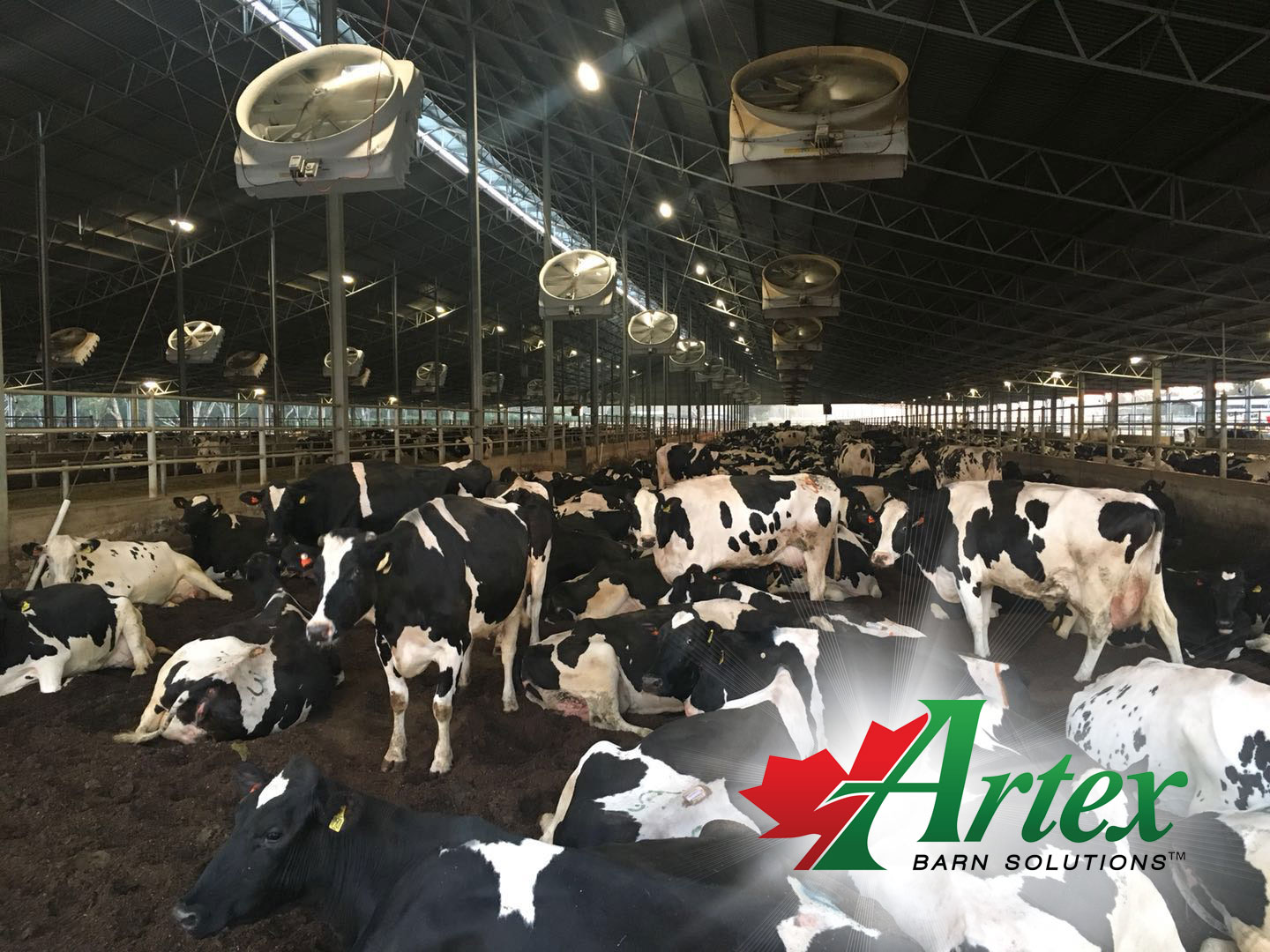 99.99% of Dairy Barns need Ventilation | The Artex Connection