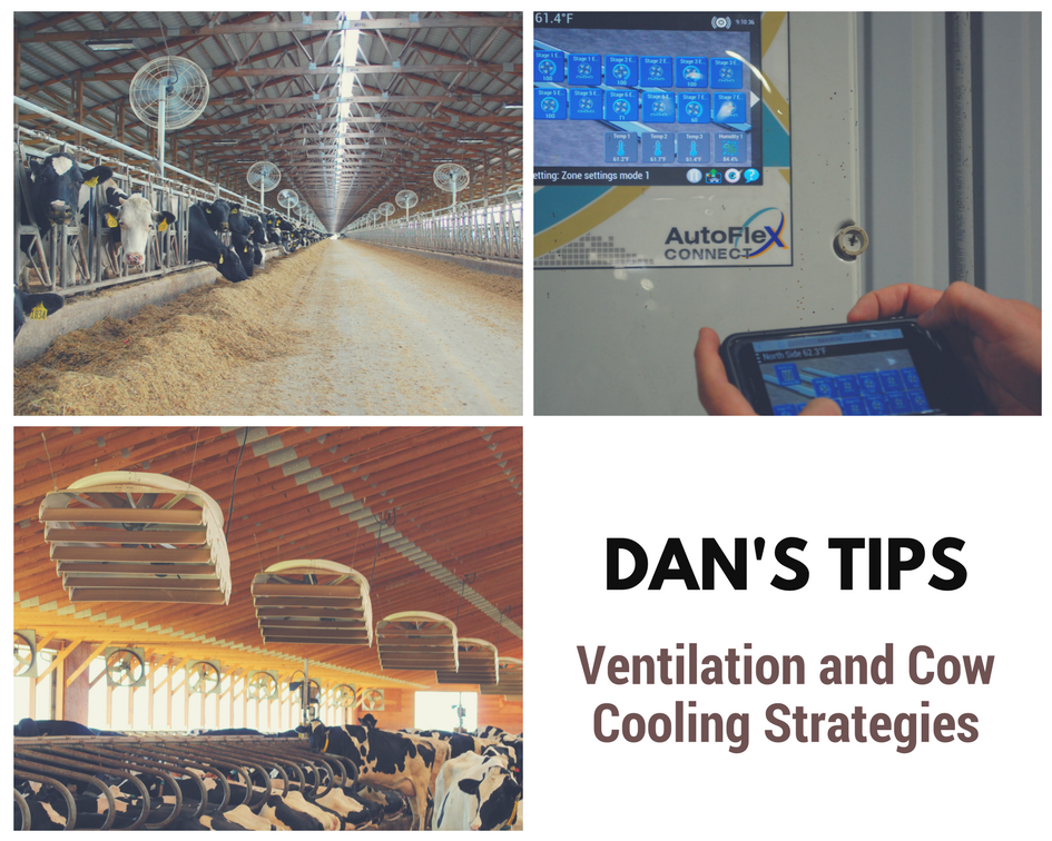 Dan's Tips: Practical Dairy Ventilation Strategies