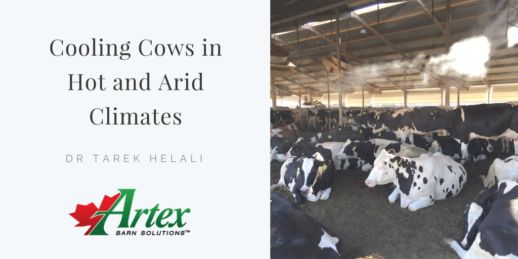 Cooling Cows in Hot and Arid Climates | The Artex Connection