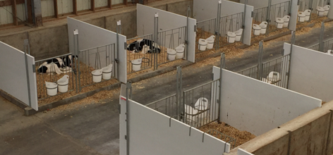 Calf Barn Ventilation | Ventilation for Calf Pens