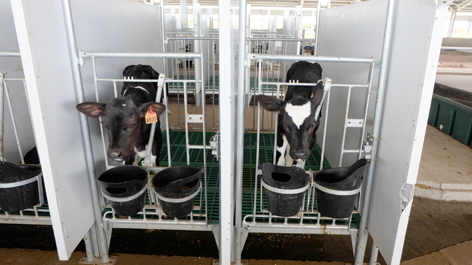 Raised Calf Pens | Artex Raised Calf Zone