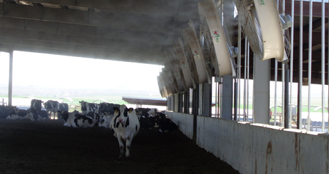 Cow Cooling Systems | Artex Cow Cooling Systems