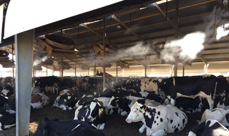 High Pressure Misting | Cow Cooling Systems