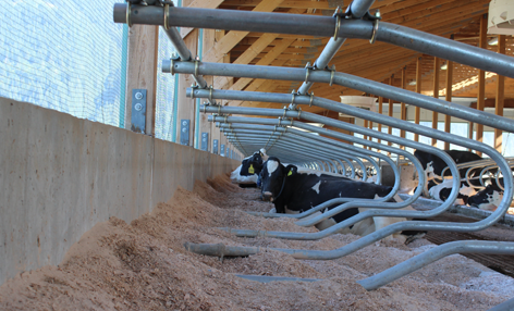 Stall Dividers | Freestalls | Cattle Handling Systems