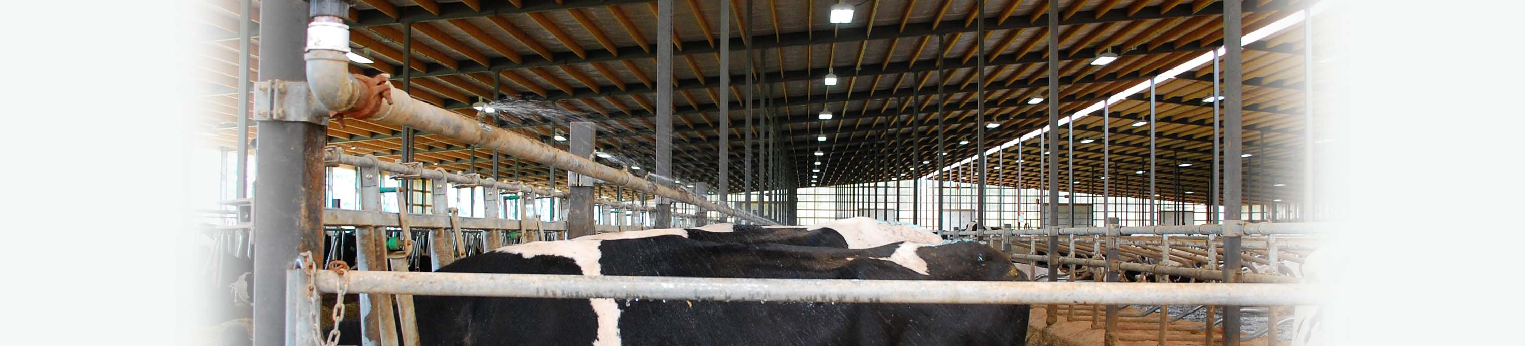 Cow Cooling Solutions | Artex Cow Comfort Solutions