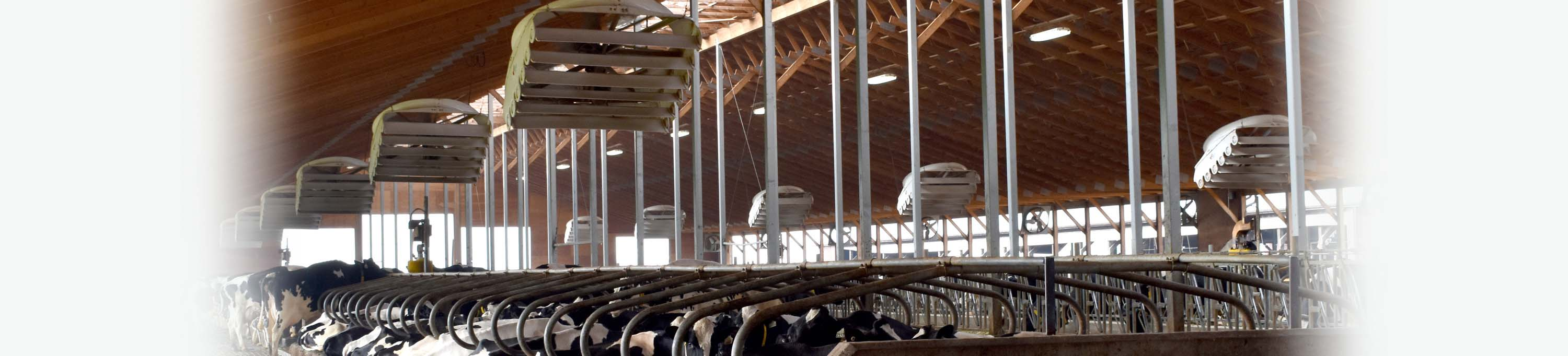 Barn Ventilation | Ventilation Solutions | Artex Cow Comfort Solutions