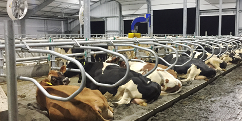 Cattle Handling Solutions | Artex Cow Comfort Solutions