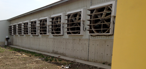 Positive Pressure Exhaust Fans | Barn Ventilation